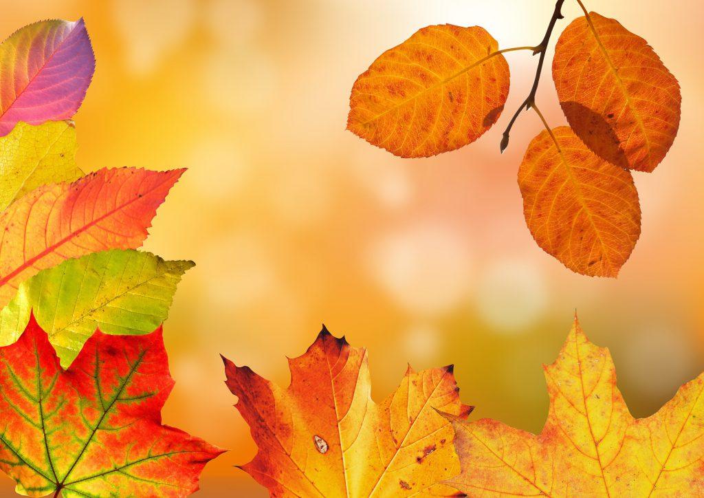 秋紅葉した葉