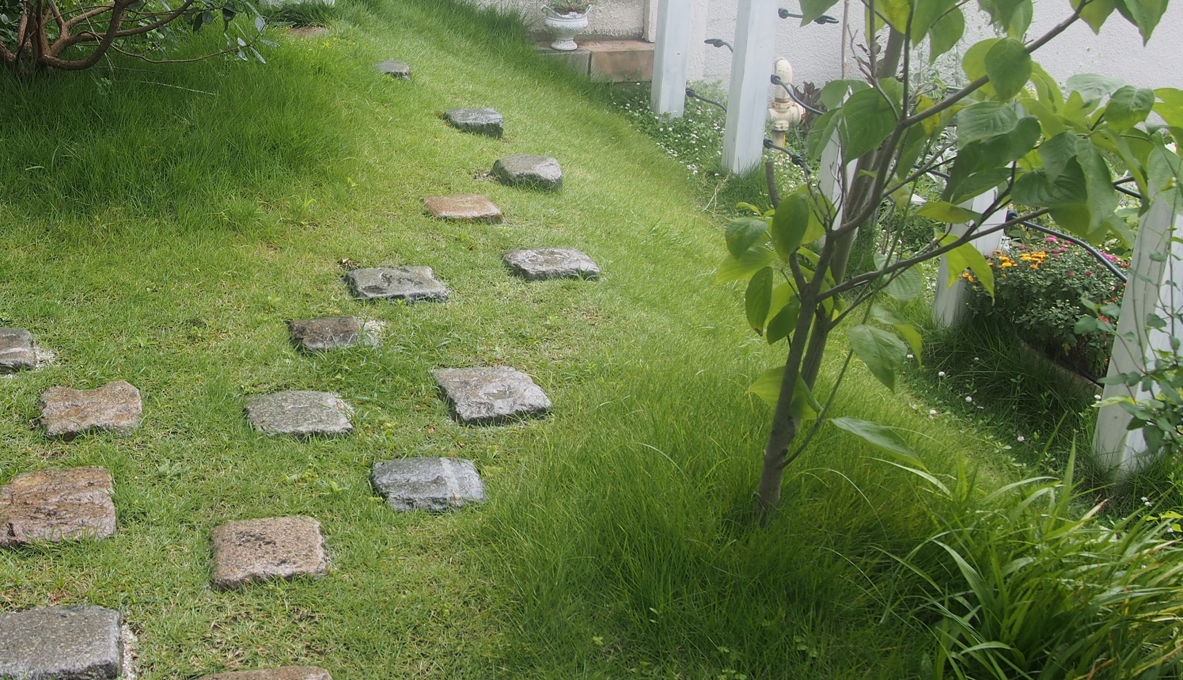 かわいい芝生の丘