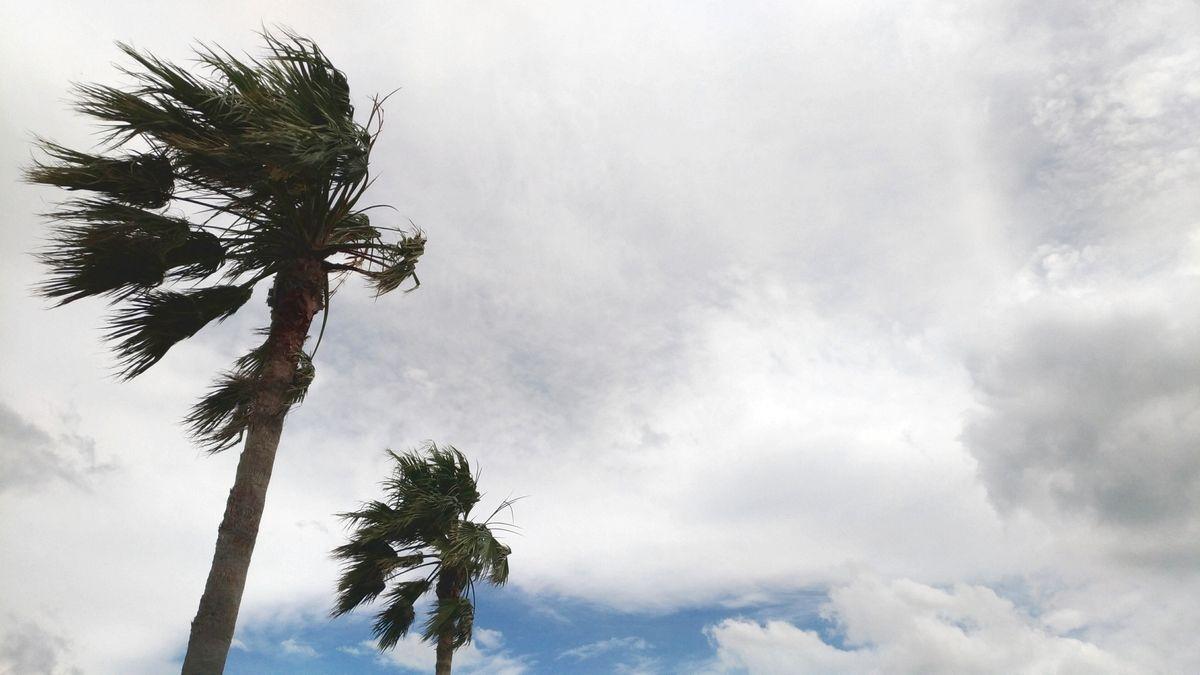 台風シーズンの塩害に注意です