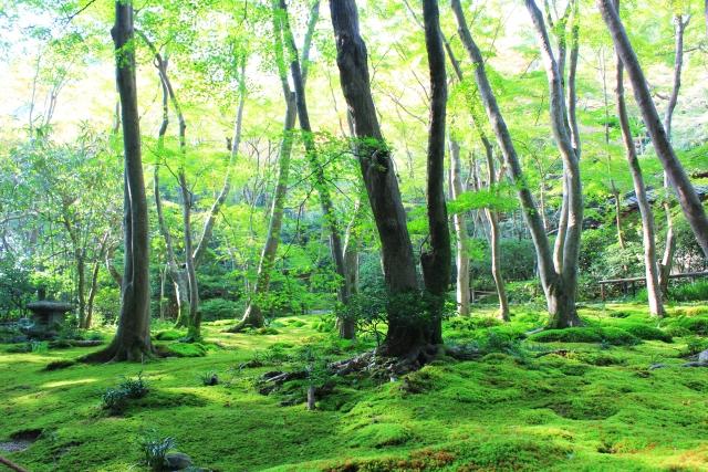 木々豊かな自然の景色